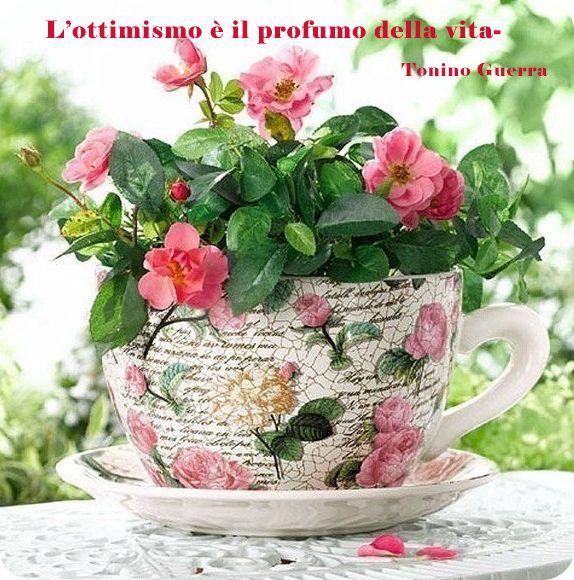 Оптимізм це аромат життя тоніно